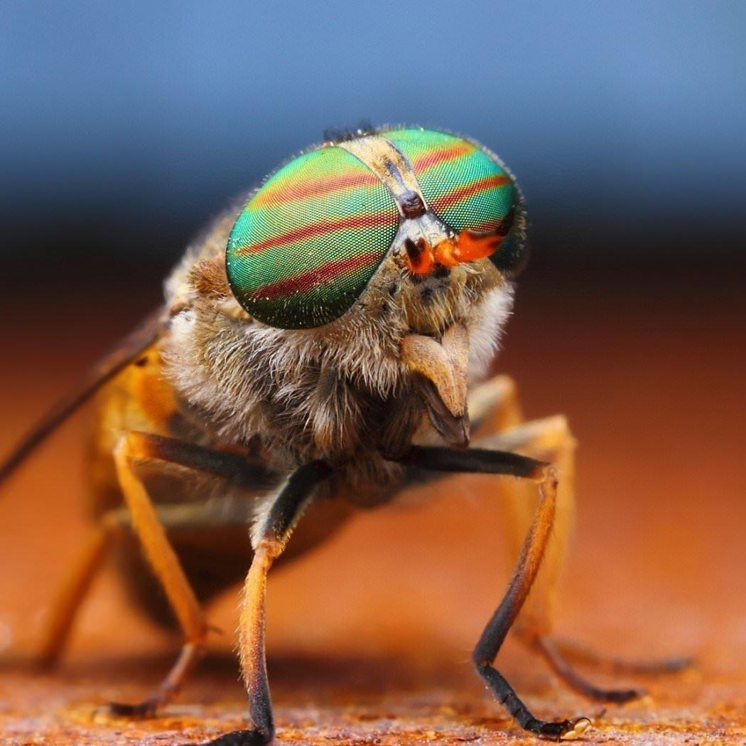 Проведение дезинсекции, заказать уничтожение насекомых