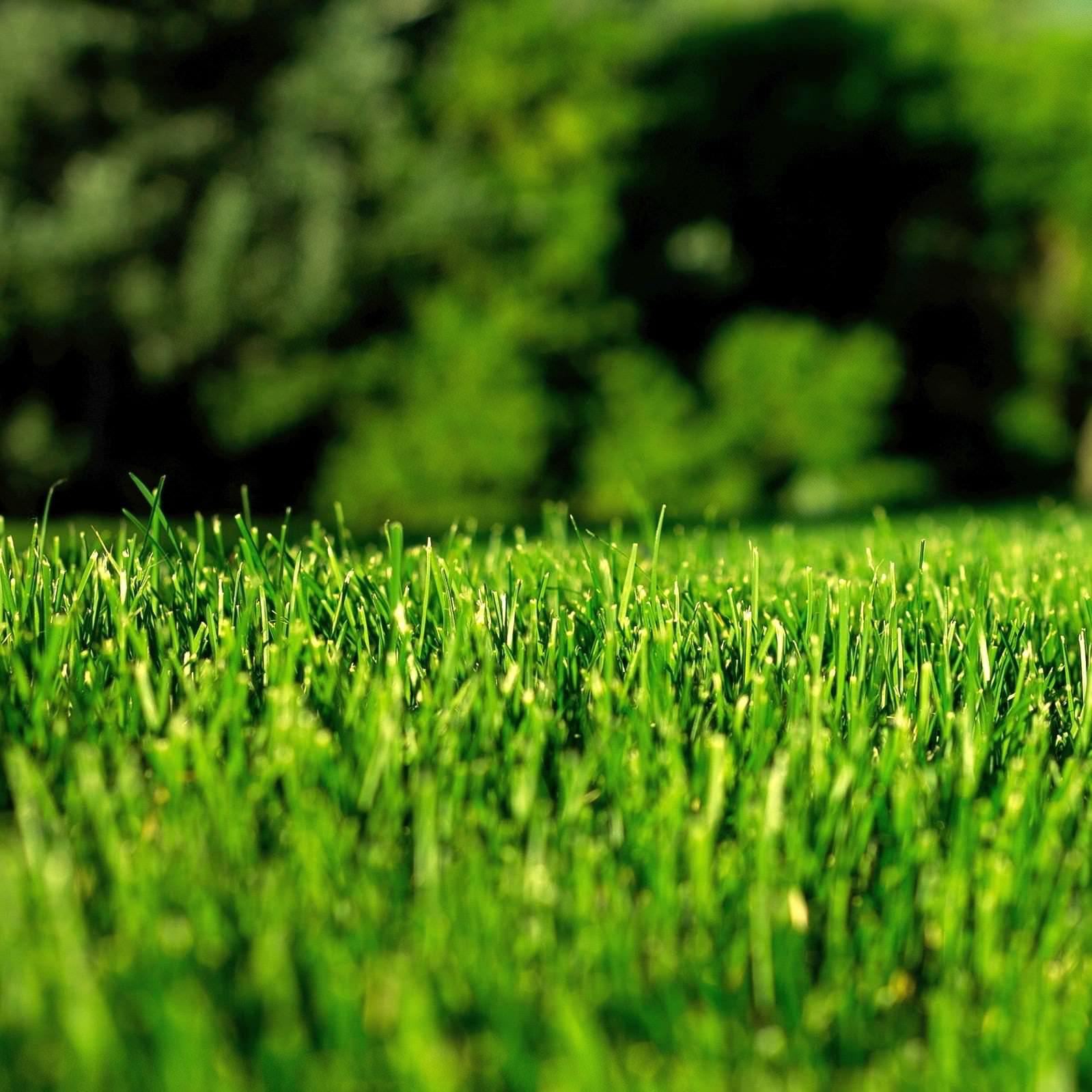 Уничтожение сорняков гербицидами