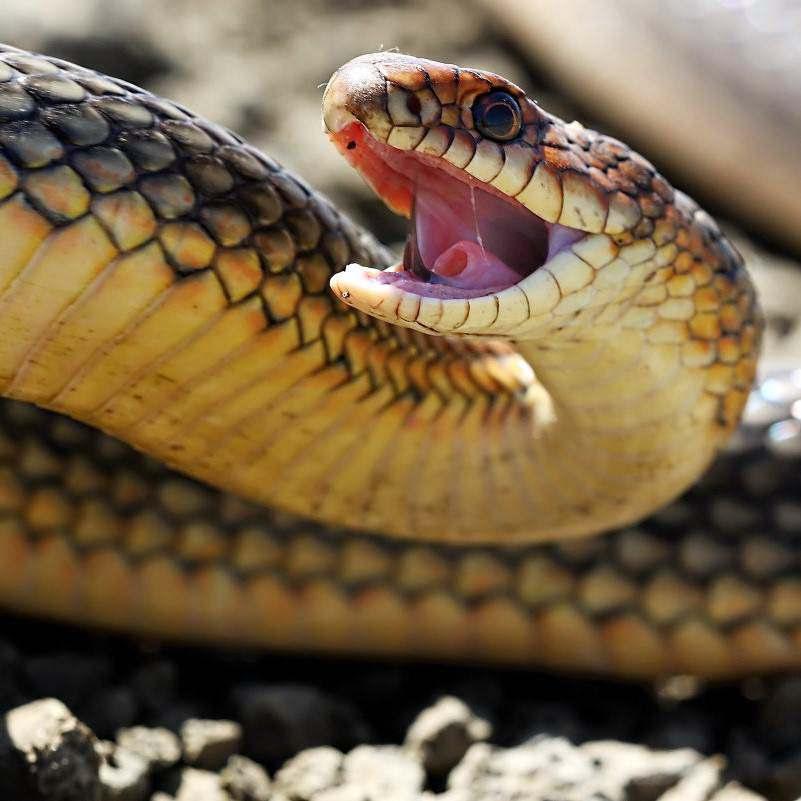 Уничтожение змей на дачном участке
